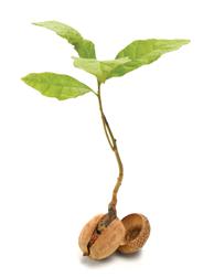 Future Seed Logo