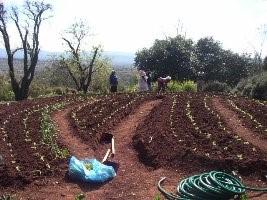 planting seedlings 22007